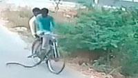 Hai người đàn ông chạy bán sống bán chết khi rắn cực độc 'đi nhờ xe đạp'